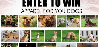 Me & My Dog Selfie Giveaway – Win Dog Apparel