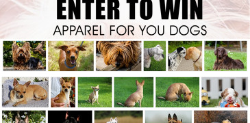 Mitten Rootz Dog Apparel Giveaway